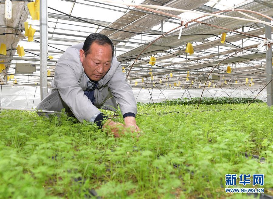 """高原喜见""""寿光绿""""——""""世界屋脊""""上的蔬菜发展古迹"""